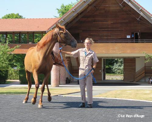 Elix s'est vu confier par la région Normandie une mission de programmation pour la construction d'un « Campus Vétérinaire Équin ».